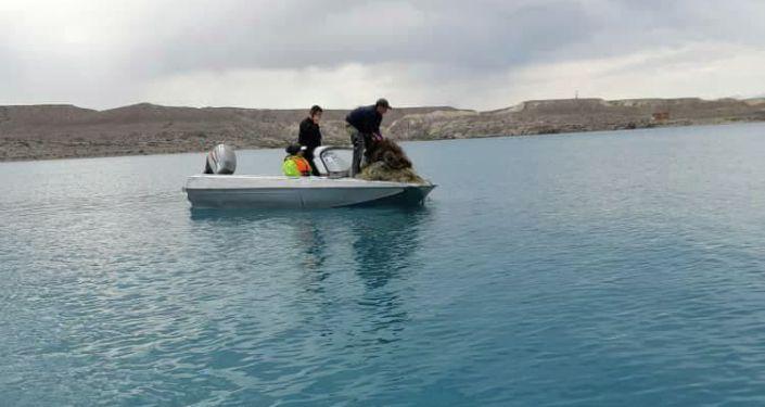 Сотрудники Иссык-Кульского биосферного заповедника очищают озеро от мусора и рыболовных сетей.