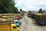 На рынках в Кыргызстане установились небывалые цены на сено и корма. Если прошлым летом тюк клевера стоил 150-180 сомов, то сегодня его продают в 2,5 раза дороже. Мы решили расспросить о ситуации продавцов и животноводов.