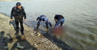 Спасатели МЧС вытаскивают из воды тело девушки утонувшей в водохранилище в селе Гроздь