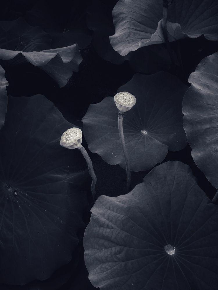 Фотография британца Mohan Wang заняла второе место в номинации Природа