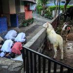 Индонезияда мусулмандар Курман айт майрымында сыйынып жатышат