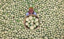 Бангладештик Рафид Ясардын Бактылуу фермер сүрөтү. Архив