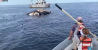 Биологдор Массачусетс аймагындагы Stellwagen Bank National Marine Sanctuary деңиз коругунда акулалардын адаттан тышкаркы агрессиясына күбө болушкан. Бул тууралуу National Geographic Россия сайты жазды