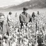 Апийимдин башын тилген колхозчулар, Ысык-Көл облусу, Жети-Өгүз району, 1970-жыл