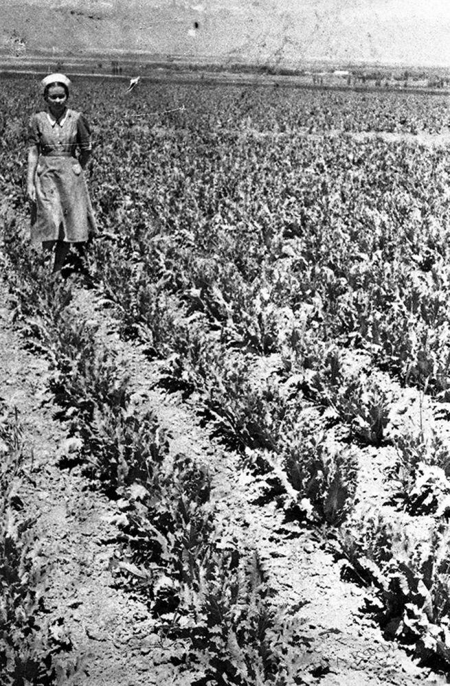 Пржевальск зоналык сыноо станциясынын айдоо аянты, 1946-жыл