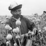 Талаада кызуу иштеген колхозчулар, Ысык-Көл облусундагы мурдагы Карл Маркс атындагы колхоз, 1970-жыл