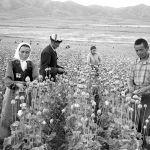 Талаада түшүм жыйнаган колхозчулар. Жети-Өгүз району, 1963-жыл.