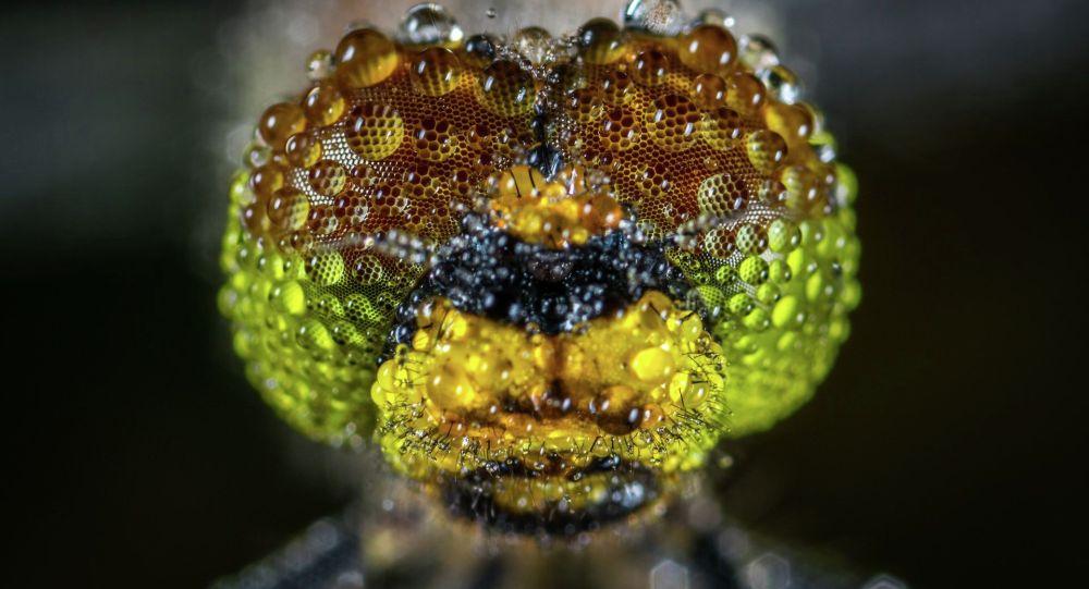 Голова стрекозы покрытая росой. Иллюстративное фото