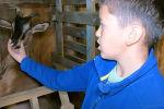 Школьник из Калининграда ведет домашнее хозяйство и помогает своей семье. Десятилетний Алик Гордюков устроил мини-ферму прямо в квартире.
