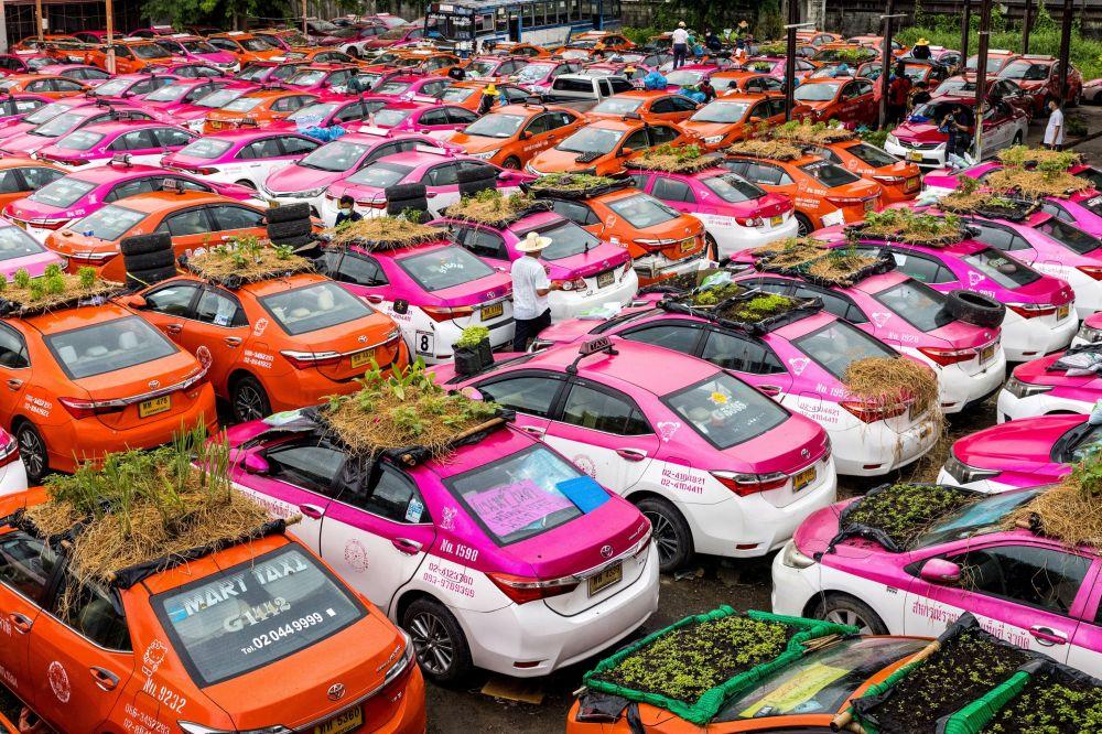 Овощные грядки на крышах автомобилей компании по аренде такси, машины которой в настоящее время не работают из-за спада в бизнесе в результате пандемии COVID-19 в Бангкоке. 15 сентября 2021 года