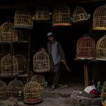 Афганский продавец птиц держит клетку на птичьем рынке в Старом городе Кабула (Афганистан). 14 сентября 2021 года.
