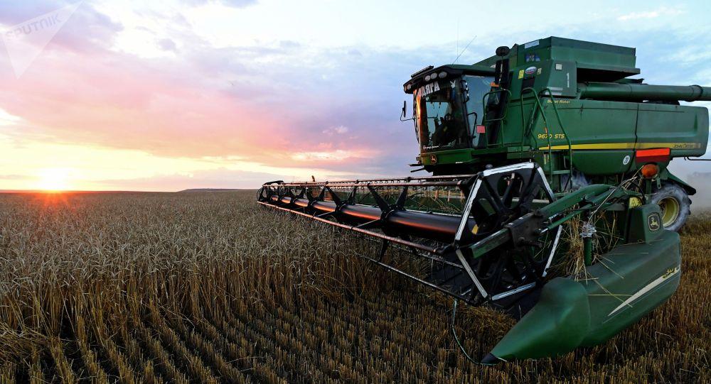 Уборка урожая пшеницы на поле. Архивное фото