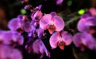 Цветы орхидеи. Архивное фото