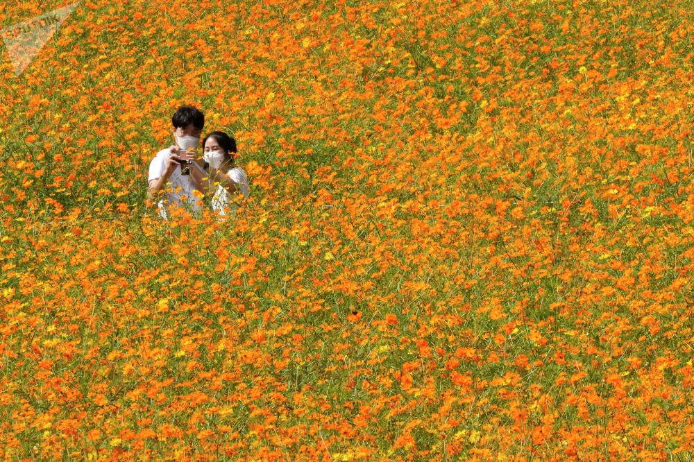 Пара в масках в качестве меры предосторожности от коронавируса делает селфи посреди поля космеи в Олимпийском парке в Сеуле. Южная Корея, 23 сентября 2021 года