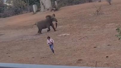 Түштүк Африкага келген туристтер аз жерден өмүрүнөн ажырап кала жаздаган видео интернет айыңына тарады. Окуя Крюгер атындагы жаратылыш паркына туристтер чогулуп, кире турган учурда болгон.
