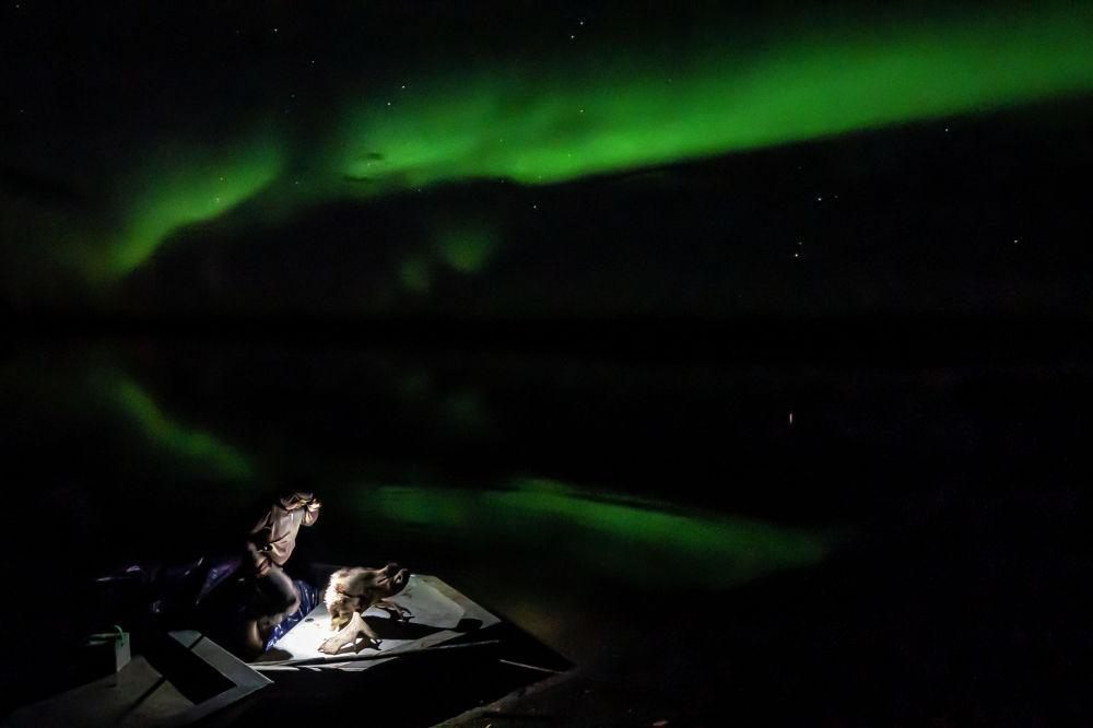 Аляска: түндүк жаркырагынын фонундагы багыштын башын кармап турган аңчы
