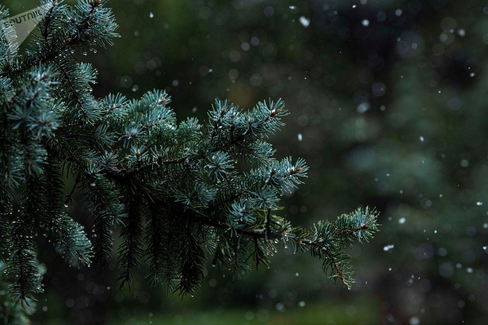 В этом году снег в Бишкеке выпал как никогда рано