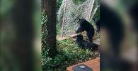 АКШдагы Грейт-Смоки-Маунтинс улуттук паркына барган туристтердин бири аюулардын жылмайткан учурун видеого тартып алган.