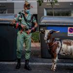 Члены элитного подразделения испанской армии с козой, которую они используют в качестве домашнего животного, ждут начала военного парада, посвященного празднику, известному как Dia de la Hispanidad или День испаноязычных в Мадриде. Испания, 12 октября 2021 года