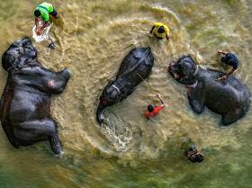 Снимок Пора купаться фотографа из Бангладеш Абдула Момина, занявший 3-е место в категории Моя Планета, одиночные фотографии конкурса имени Стенина