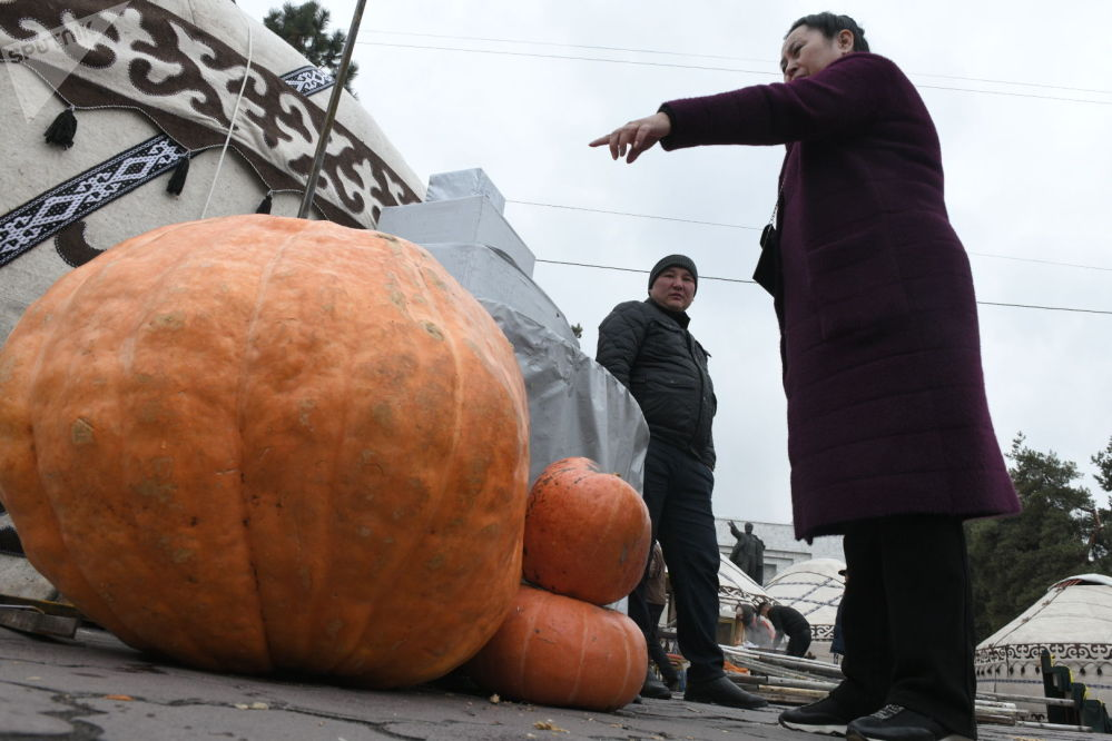 Тыква, выращенная в селе Ивановка Иссык-Атинского района. Семена привезены из Германии, вес тыквы — 150 килограммов.