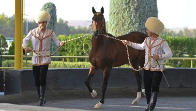 Ахалтекинский конь подаренный президентом Туркменистана Гурбангулы Бердымухамедовым главе Казахстана Касым-Жомарту Токаеву