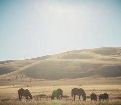 Кыргызстандын тоолору. Архив