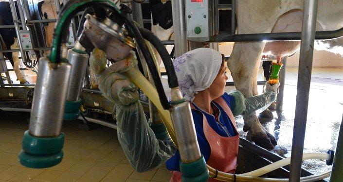 Работа в совхозе Коелгинское Челябинской области