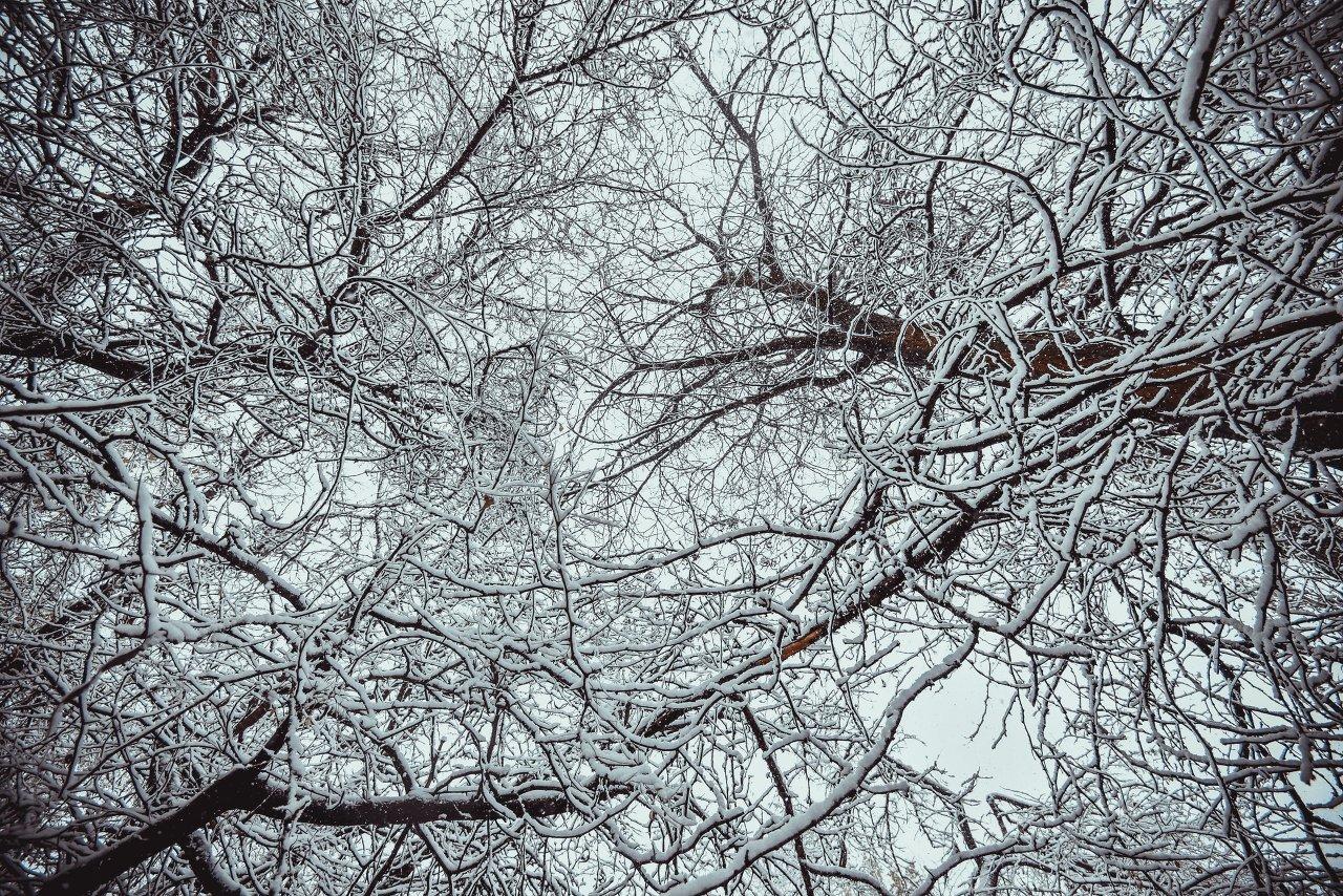 Зарисовки снежных веток.