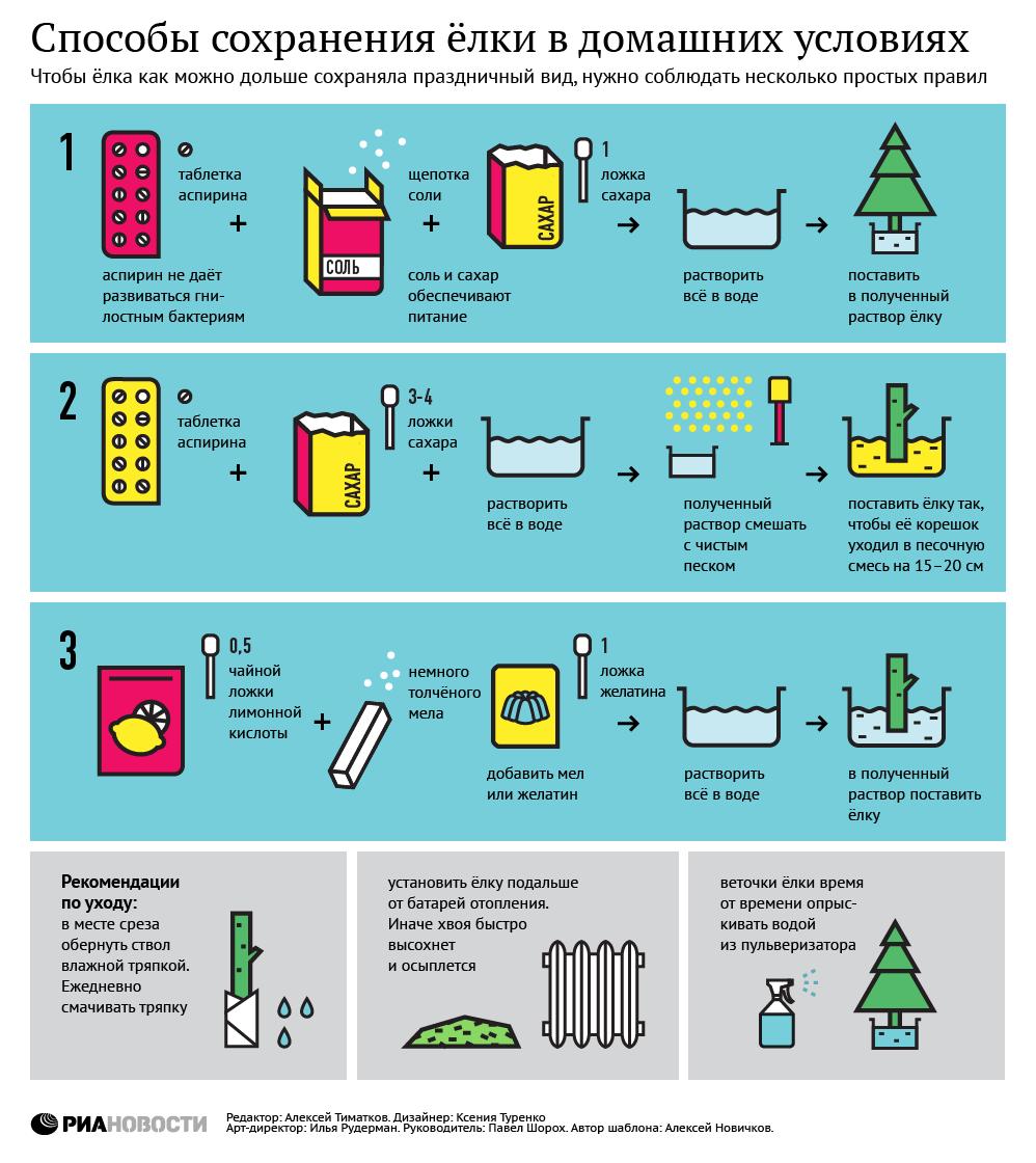 Способы сохранения ёлки в домашних условиях