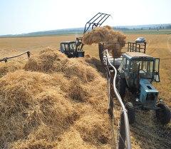 Архив: заготовка сена и зеленой массы
