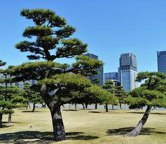 Токио город. Архивное фото