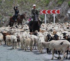 Мальчики на конях перегоняют отару овец через дорогу. Архивное фото