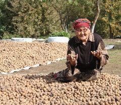 Грецкий орех из юга Кыргызстана