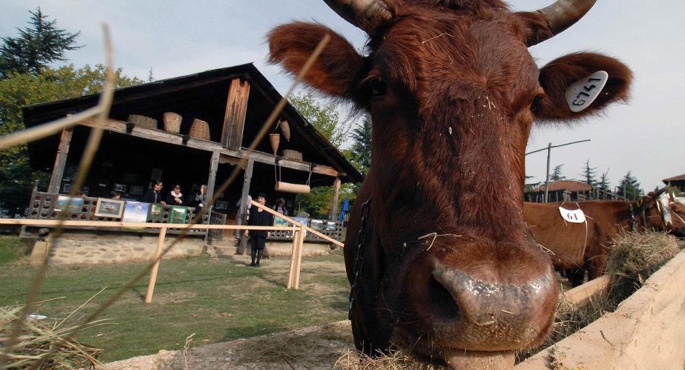 Животноводческая ферма. Архивное фото
