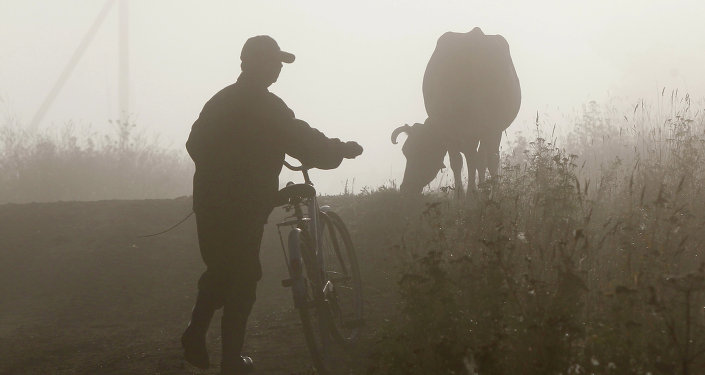 Ранним утром в районе деревни Ивановская