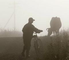 Мужчина с велосипедом идет за коровой. Архивное фото