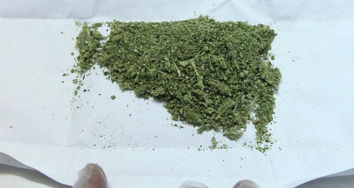 Изъятая марихуана в экспертно-криминалистическом центре. Архивное фото