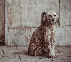 Собака на одном из улиц. Архивное фото