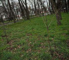 Бишкектеги Фучик паркында жер тилкеси сатыкка коюлган