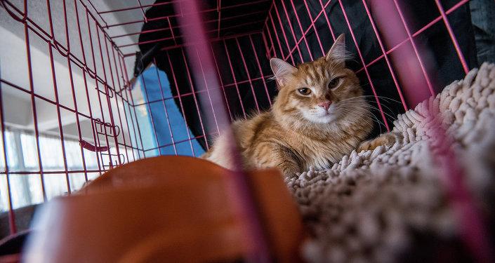 Кот в клетке. Архивное фото