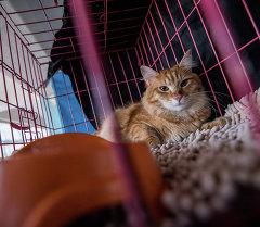 На международной выставке кошек в Бишкеке. Архивное фото