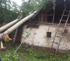 Ураганный ветер повалил столбы и деревья в Кара-Кульджинском районе