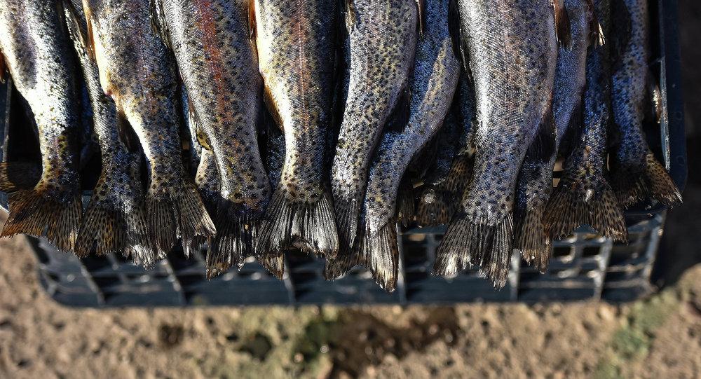 Рыбы на продажу на рынке. Архивное фото