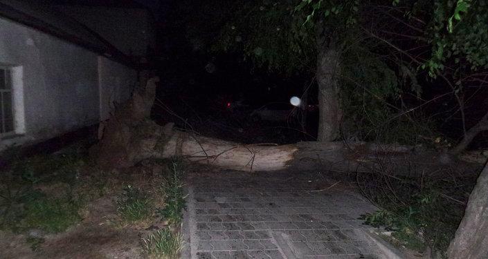 Поваленное дерево на пересечении улиц Иваницына Тыныстанова. Архивное фото