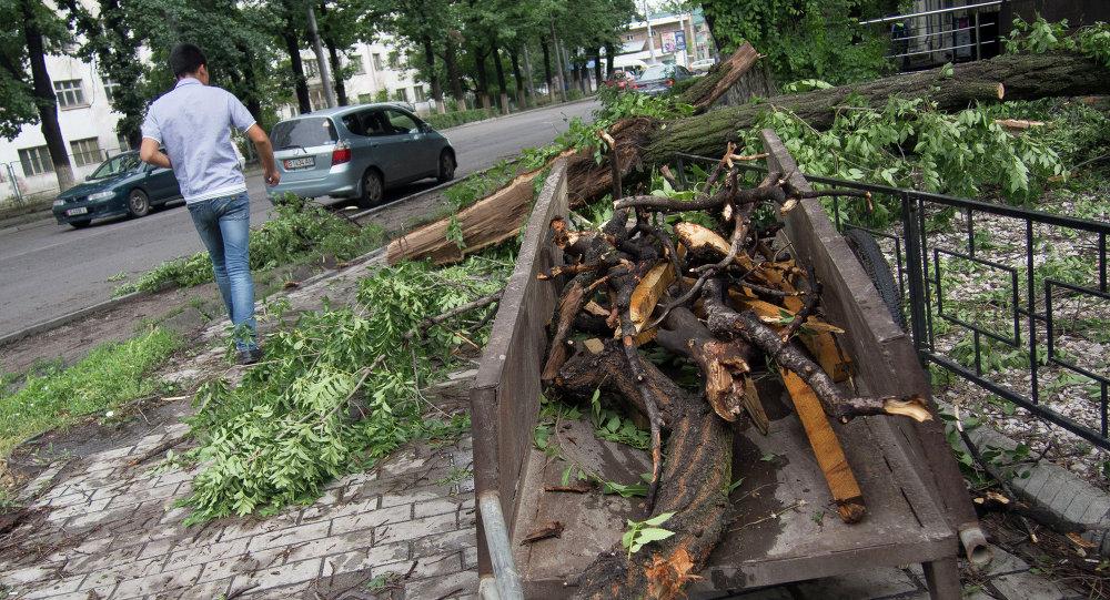 Столичные службы устраняют последствия ураганного ветра.