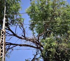 ОАО Северэлектро не восстановило еще 23 обрыва проводов после урагана
