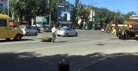Колесо у трактора оторвало посреди дороги в Бишкеке