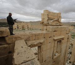 Пальмира шаары. Архив