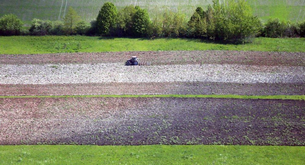 Тракторист боронит вспаханное поле. Архивное фото